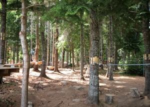 On Tree Beginner Course